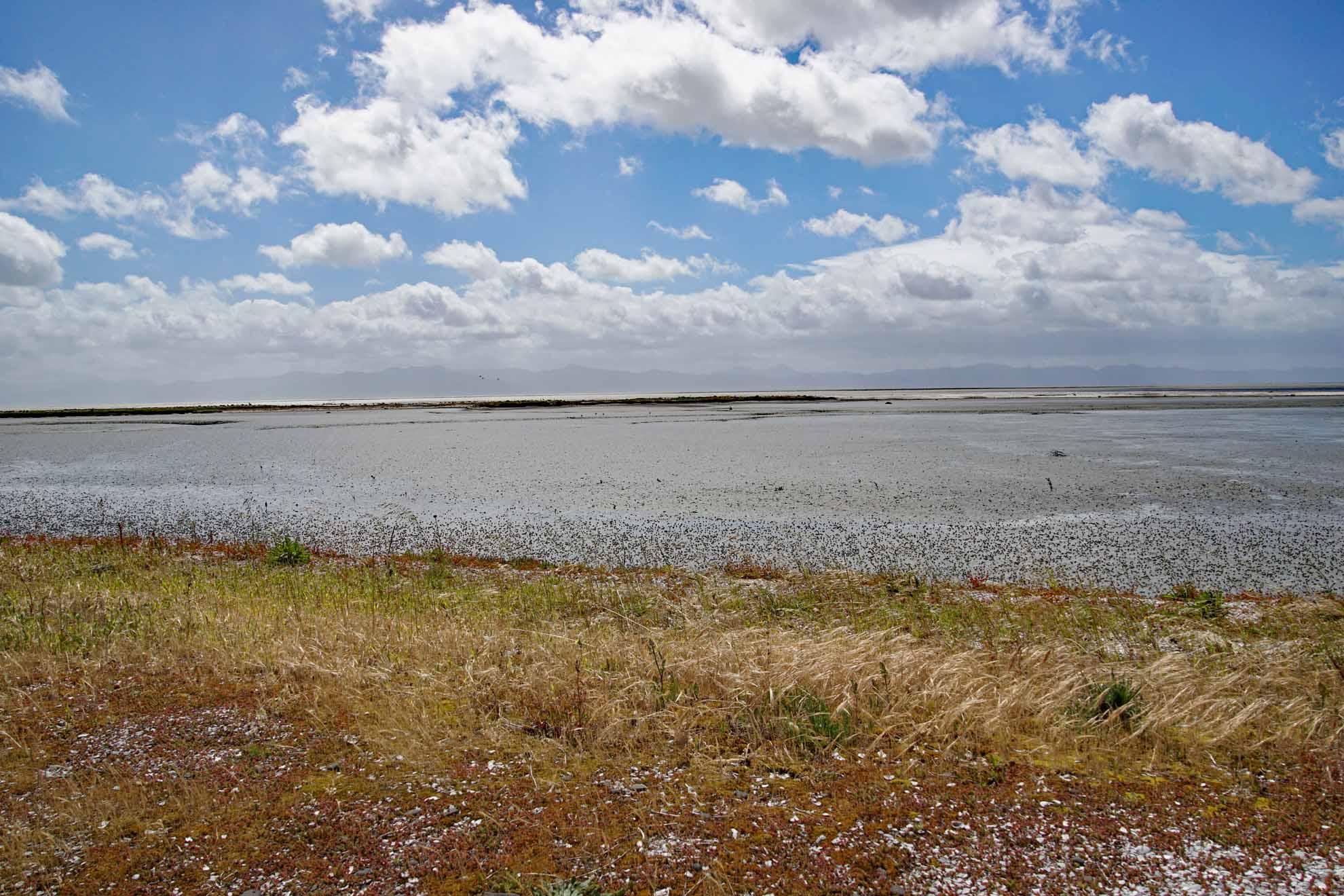 Flachwasserzone - beliebt bei Wattvögeln