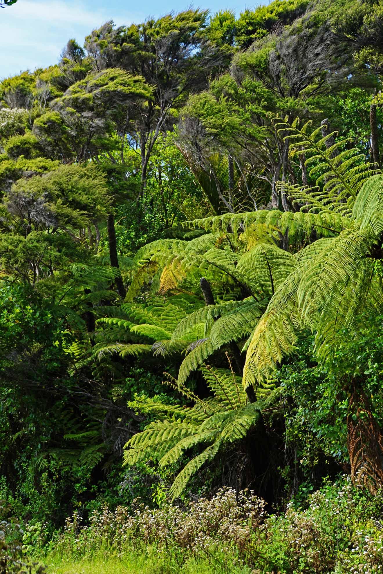 Große Farne im Regenwald