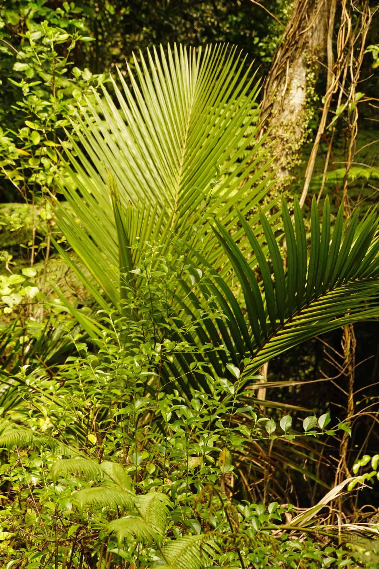 Viele verschiedene Grüntöne im Regenwald
