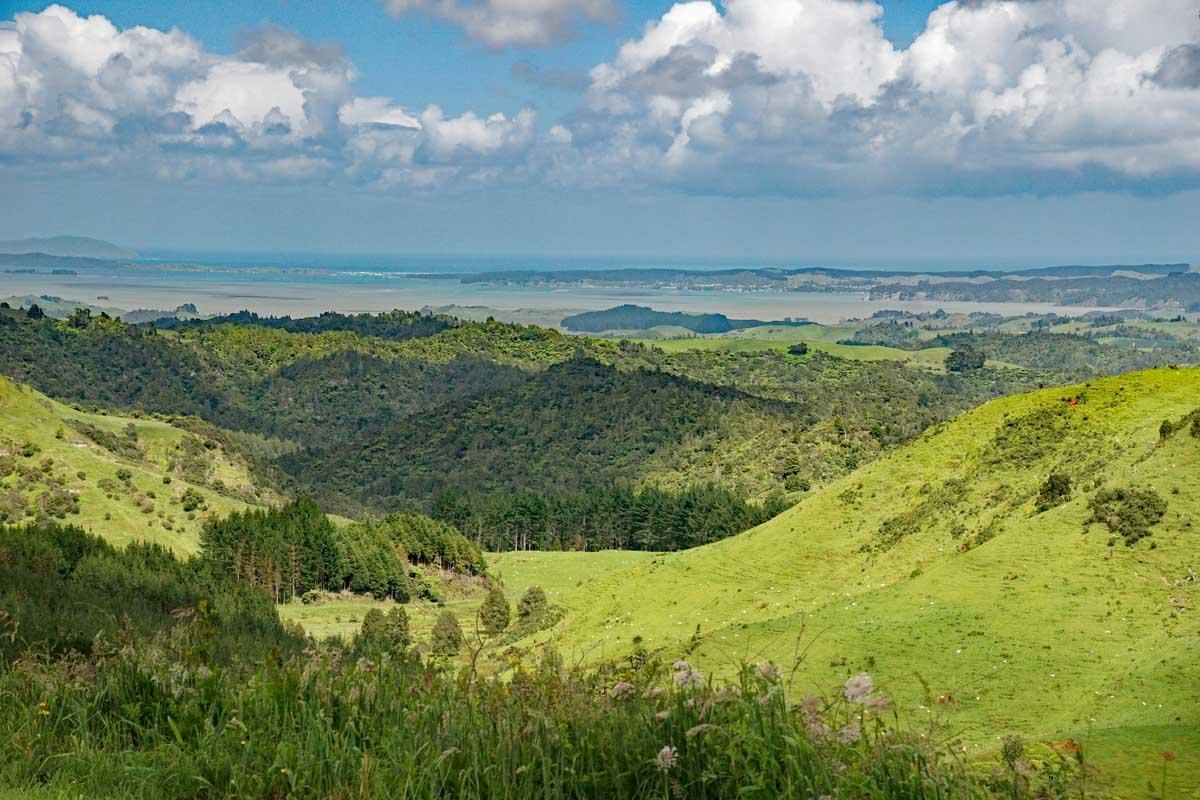 Auf dem Weg von Waitamo Caves nach Kawhia Blick auf Kawhia Habour