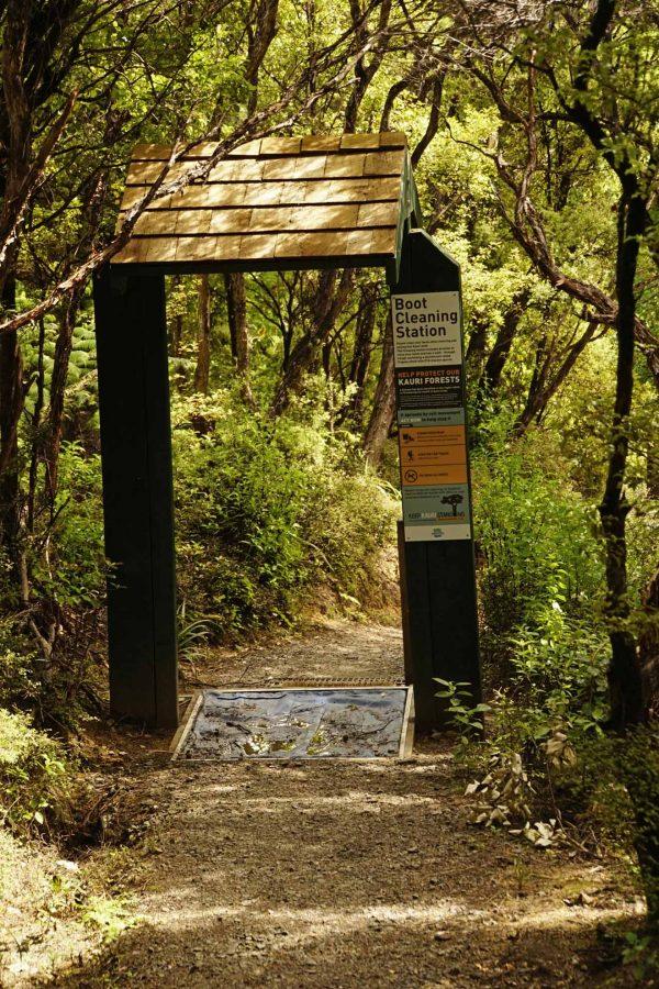 Coromandel - Long Bay Kauri Wald Boot Cleaning