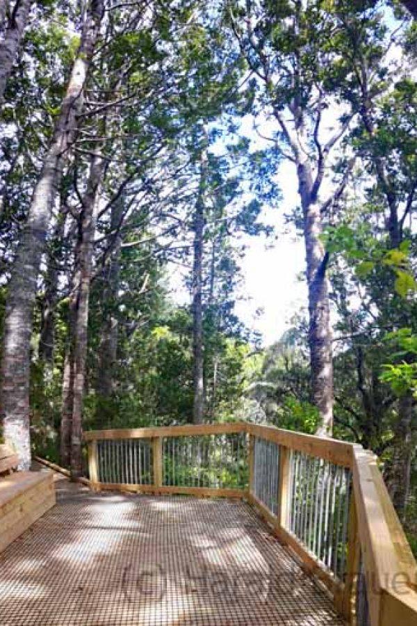 Coromandel - Long Bay Kauri Wald