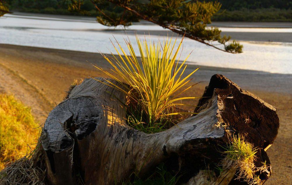 Hobbitland Whananaki Neuseeland