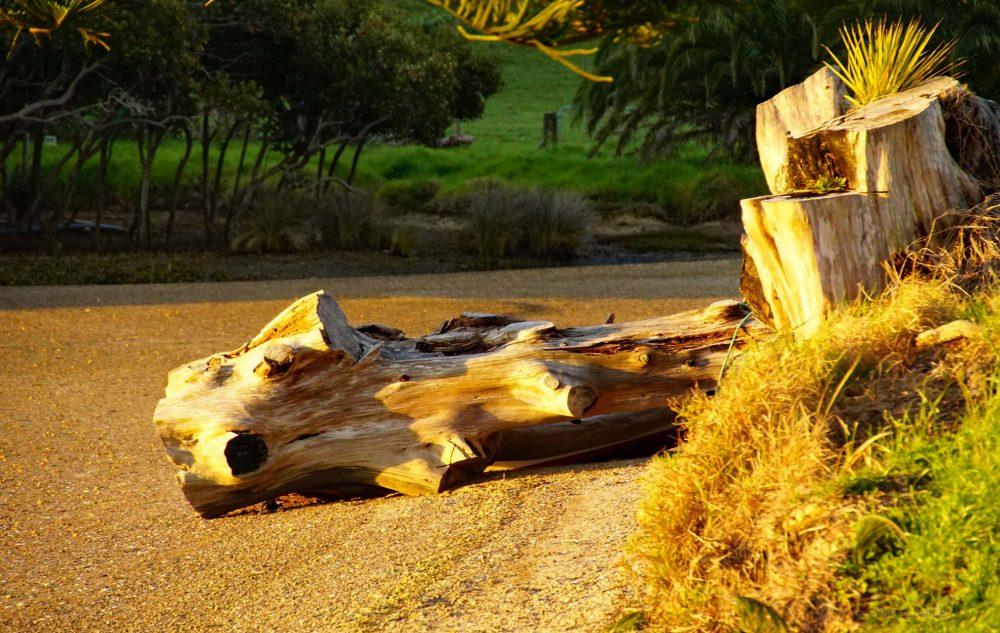 Whananaki Neuseeland