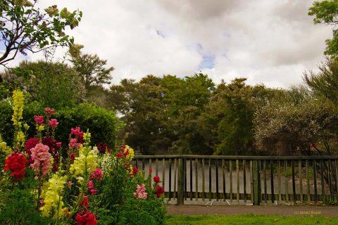 Kuirau Park - Roterua