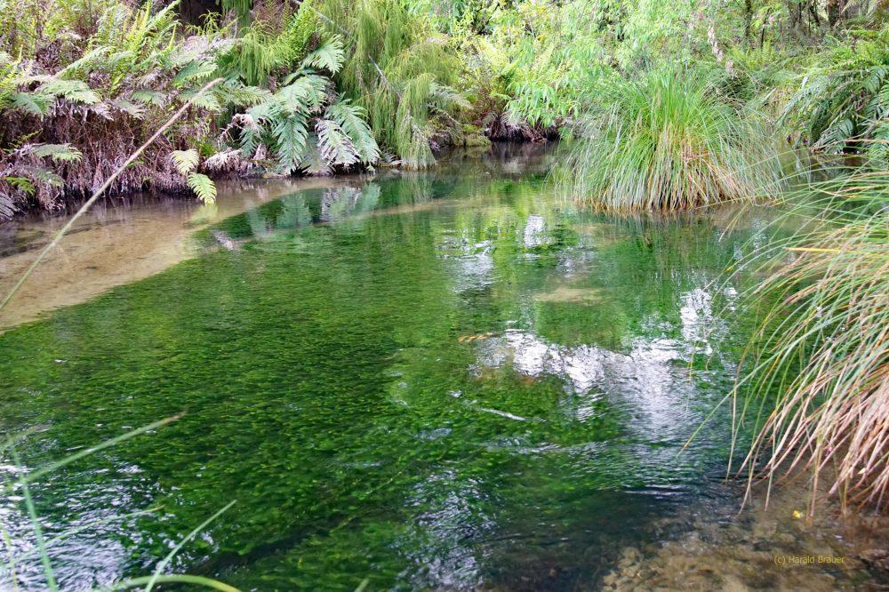 Ein kleiner Bach Im Burried Valley
