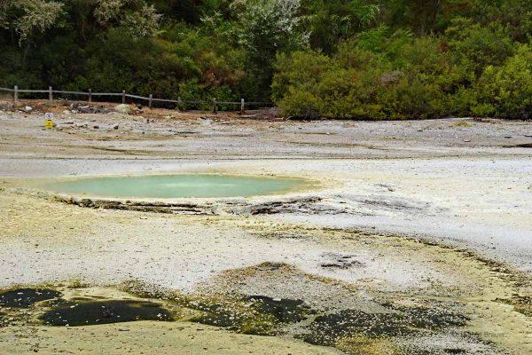 Der Austern-Pool