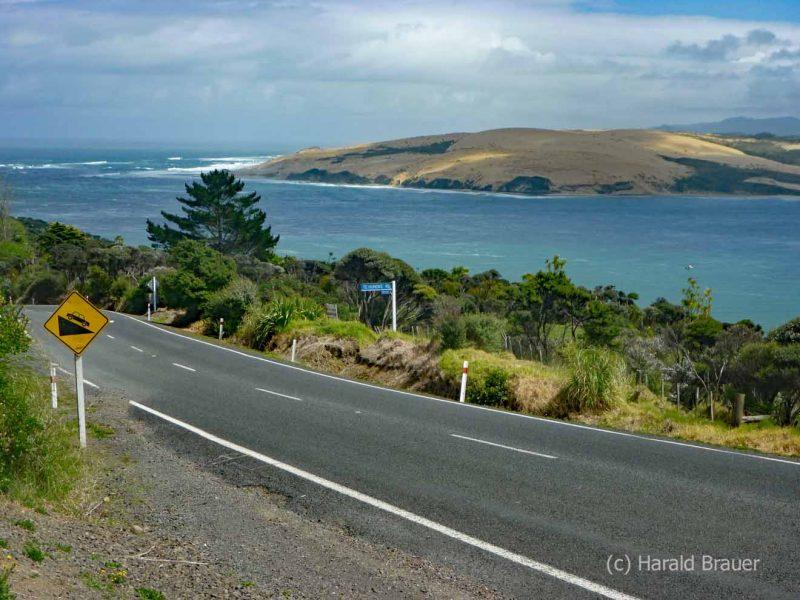 Waiiporua-Kauri-Forest03
