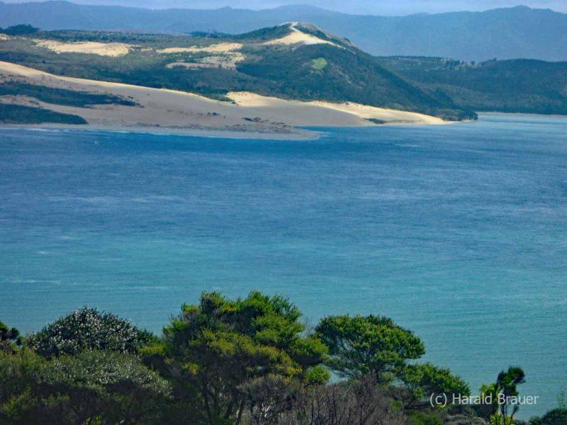 Waiiporua-Kauri-Forest04