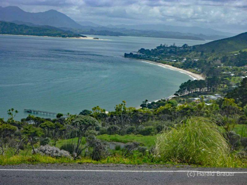 Waiiporua-Kauri-Forest05