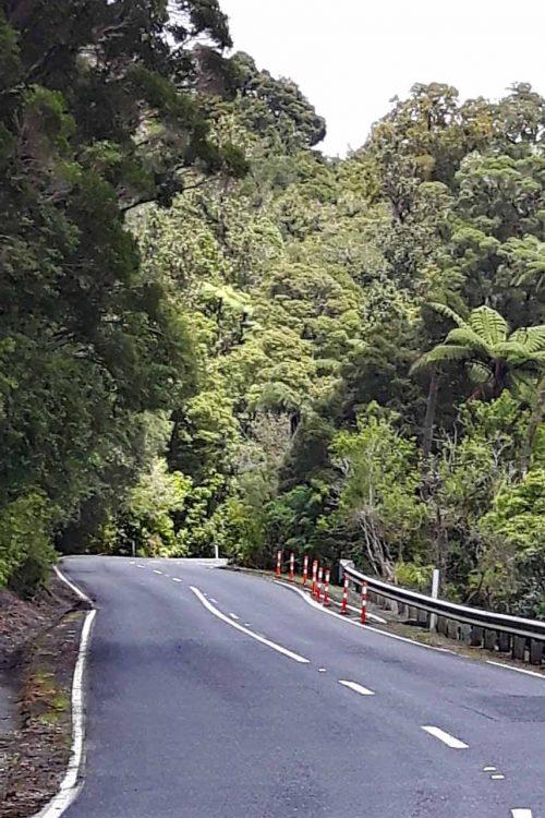 Waiiporua-Kauri-Forest09