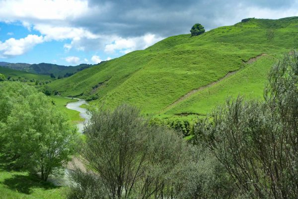 Auf dem Weg zu den Waitanguru Falls